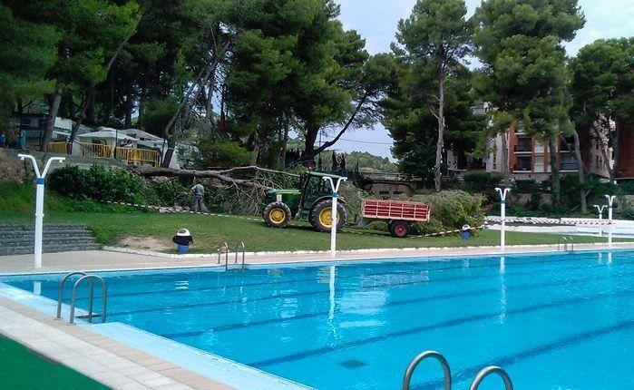 Desplomado un pino en la piscina de altura infopalancia for Piscinas en altura