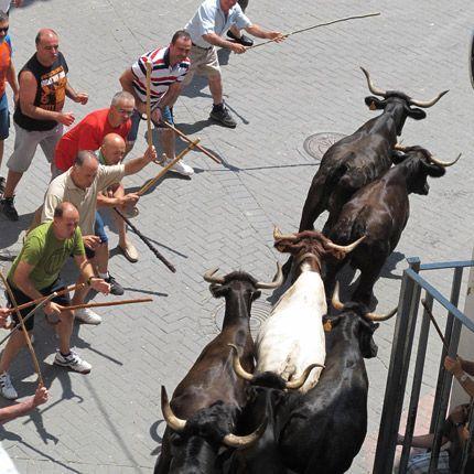Castellnovo en Fiestas. El programa de festejos comenzará el jueves 13 y concluirá el 23 de agosto. Las exhibiciones taurinas tendrán lugar del 18 al 21.