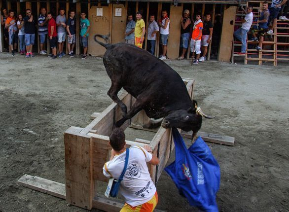 Fallo del concurso de ganaderías