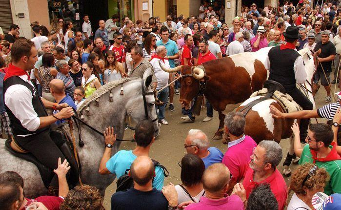 Las Reinas bajan el manso hasta la plaza. Foto:J.Plasencia.