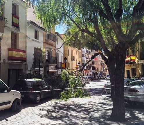 Cae una rama sobre dos coches en Altura
