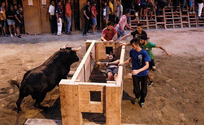 Exhibición de toro en puntas. Foto:José Plasencia.