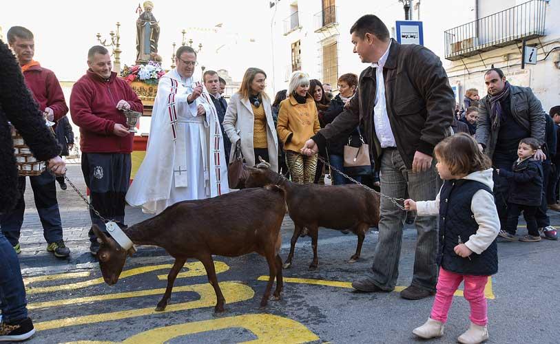 Exito de participación en la Bendición de animales en Segorbe. La Cofradía de San Antón y el Ayuntamiento realizan algunas mejoras para la fiesta